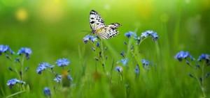 papillon - Copie (3)